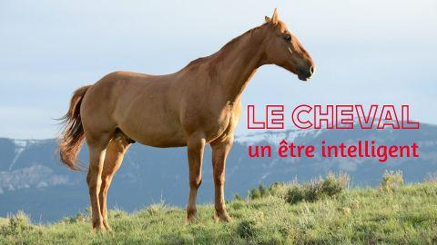 Le cheval, un être intelligent