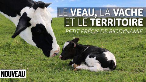 Le Veau, la Vache et le Territoire - Petit précis de biodynamie