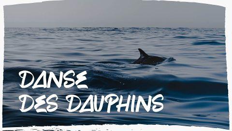La danse des dauphins